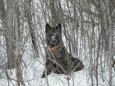 wolf minnesota