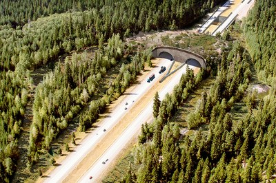 The biggest wildlife crossing you've never heard of