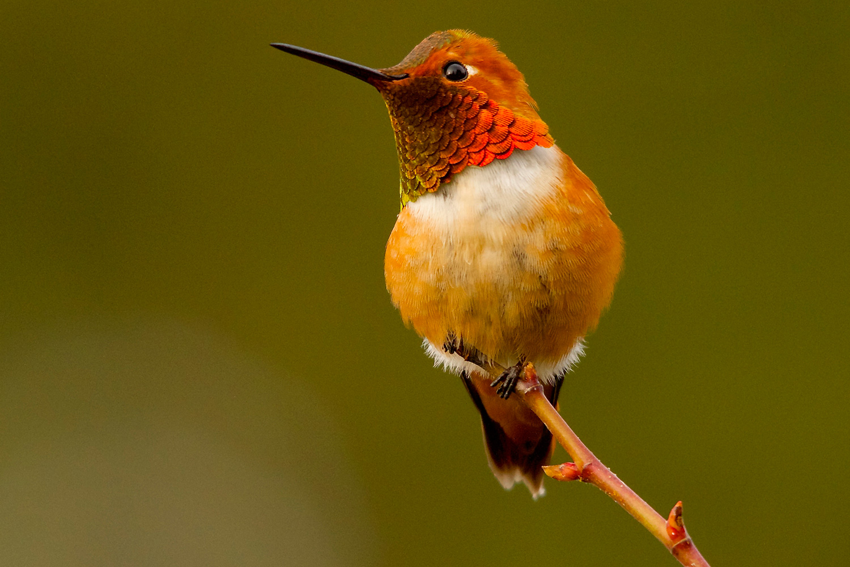 Humming Bird Social Study-4 - KopyKitab