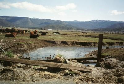 creek stewardship - Ag style
