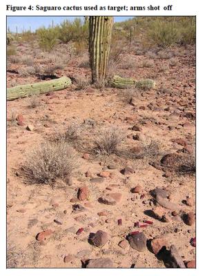 Saguaro arms shot off