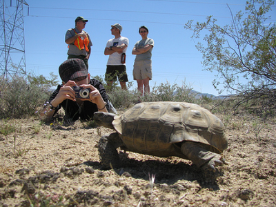 Students Photograph Tortoises
