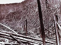 1910 fire blowdown