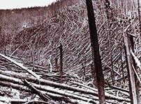 1910 fire blowdown