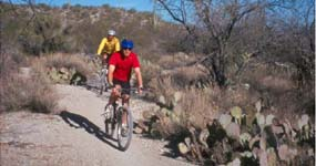 Biking in Saguaro NP