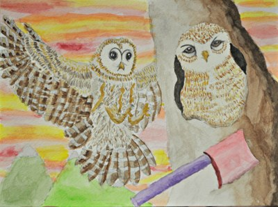 Spotted owl drawing
