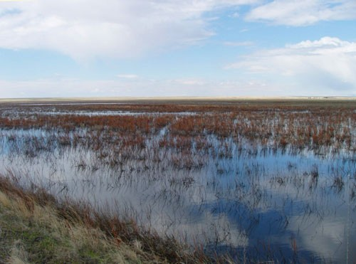Wetlands of 66 Ranch in Montana