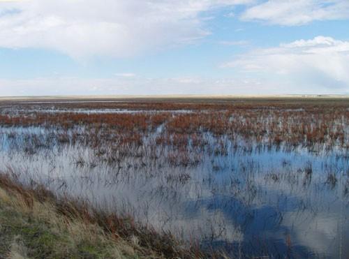 Wetlands of 66 Ranch in Montana