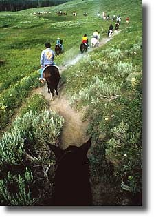 Horses in a national park