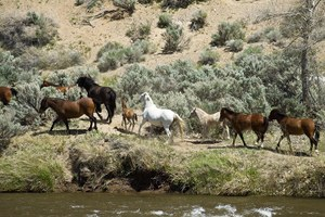 Rants from the Hill: Speaking of Wild Horses