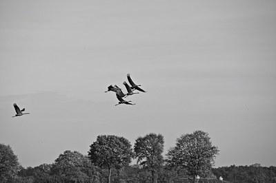 cranes-515560_640.jpg