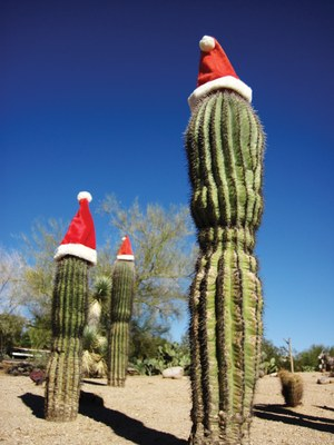 Heard photo Santa Cactus