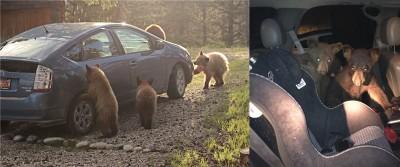 Wyoming and Colorado bears