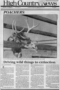 Poachers: Driving wild things to extinction