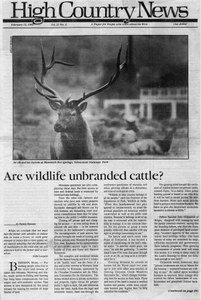 Are wildlife unbranded cattle?