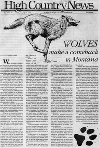 Wolves make a comeback in Montana