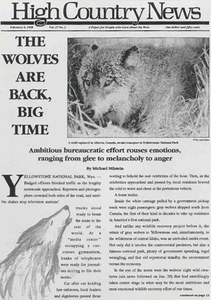 The wolves are back, big time