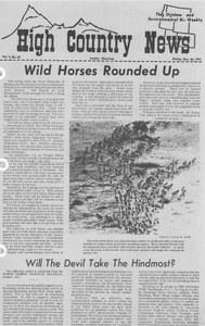 Wild horses rounded up