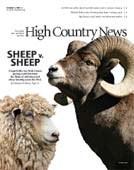 Sheep v. Sheep