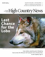 Last chance for the Lobo