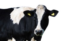 Dairy injuries and deaths 2003-2009