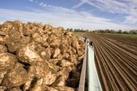 Biotech beet-down