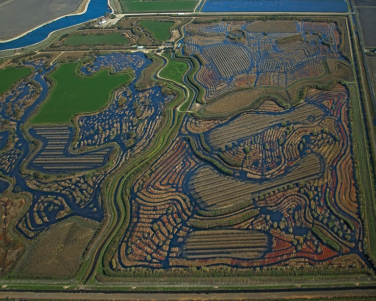 Duck-hunting wetland in the Sacramento and San Joaquin Delta.