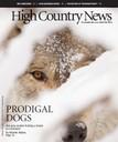 Prodigal Dogs
