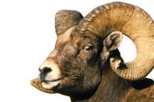 Ewe-haul