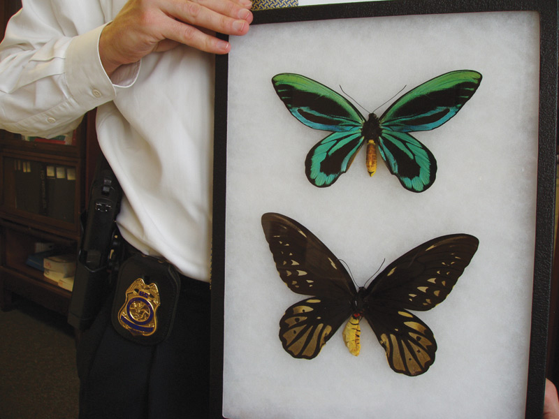 The Butterfly Sting High Country News