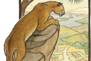 A California Bestiary: Beauty of the beasts