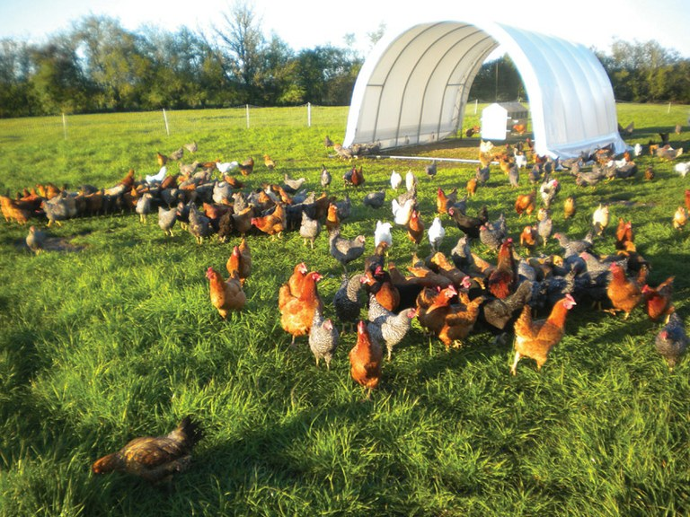 Hoop house and chickens at Afton Field Farm in Oregon's Willamette Vall