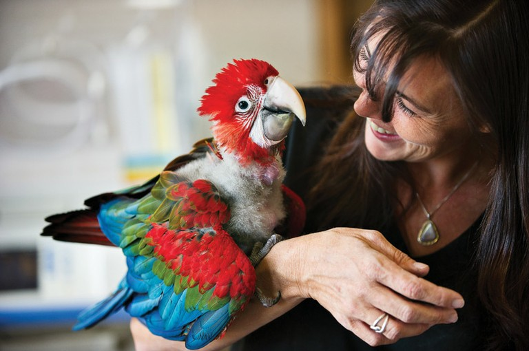 Parrot Garden vet-tech Wendy Hatchel holds Zoey, a 10-week-old green-winged macaw.