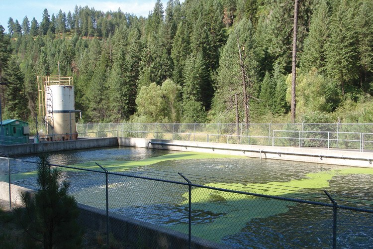 Effluent from the wastewater treatment plant in Troy, Idaho, helps support a wild steelhead population.
