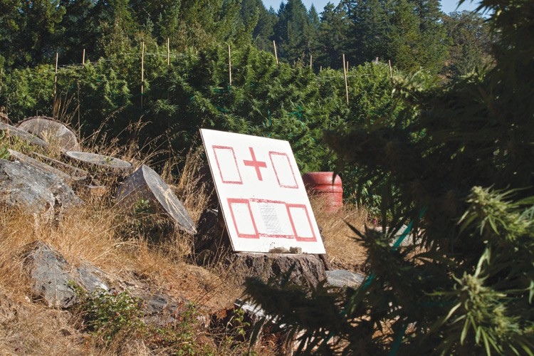A red medical cross -- big enough to be visible from a low-flying helicopter -- identifies a marijuana grow site that supplies a cannabis dispensary.