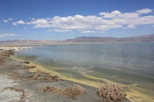 Re-watering Nevada's dying Walker Lake