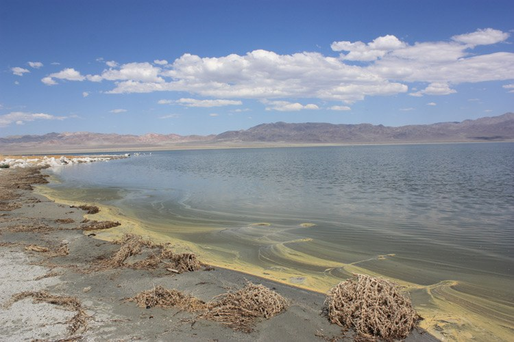 A yellow scum lines the shore of a dying Walker Lake, where Lahontan cutthroat trout once thrived. In the distance lie rocks with mineralization from the lake's high salt concentrations, exposed because of the ever-receding shoreline.