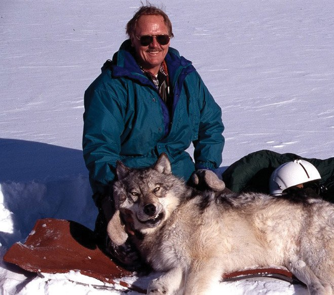 Niemeyer and a captured wolf in Yellowstone National Park.
