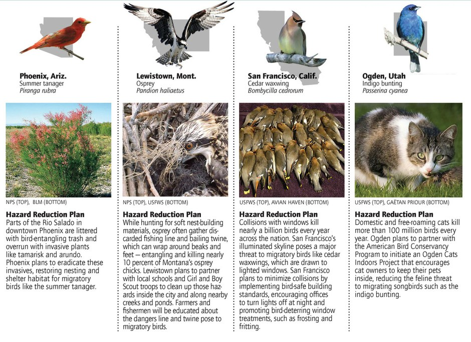 Flight risks: Cities reduce hazards for migrating birds