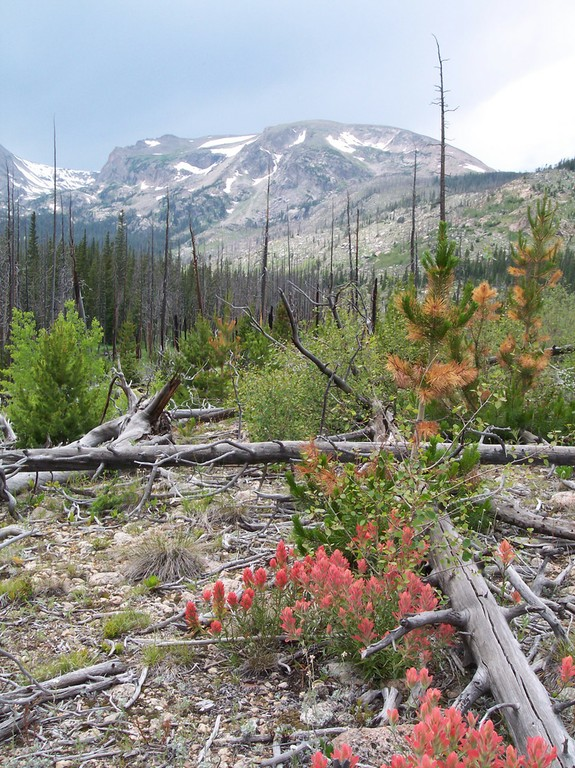 An abundance of regrowth in Rocky Mountain National Park shows how fire can benefit a forested area.