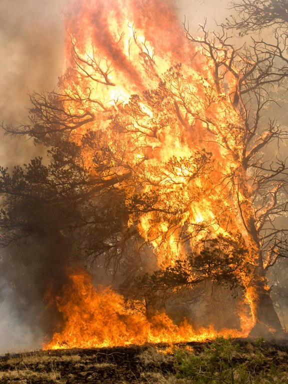 A tree torching in Arizona's 2011 Wallow Fire.