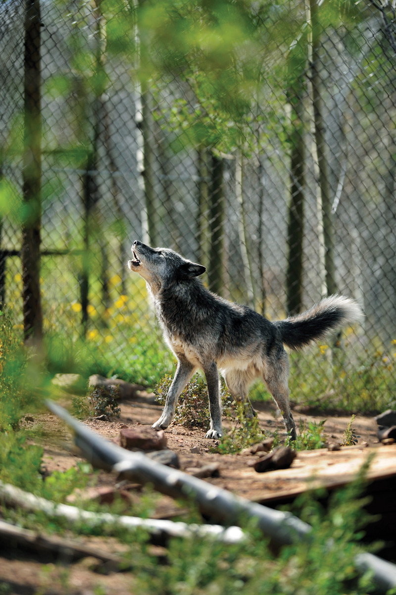 Dog Captivity Day