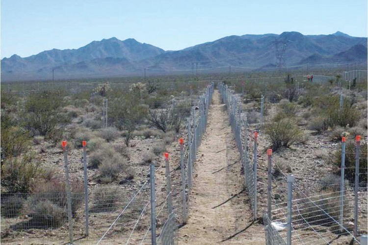 Desert tortoise pens at the Ivanpah site in the Mojave Desert.
