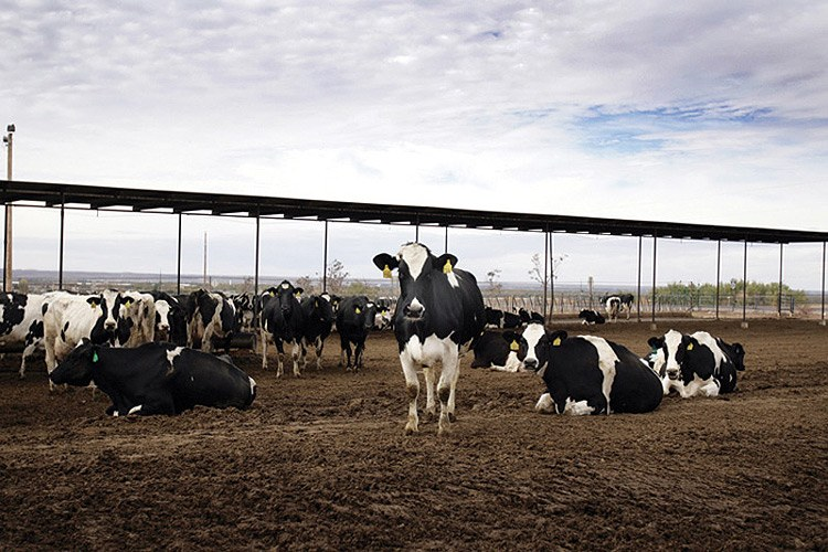 One of the many large-scale dairies that operate along Interstate 10 in Doña Ana County, New Mexico.