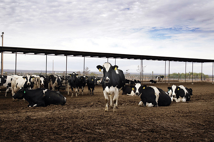A Citizen Activist Forces New Mexico S Dairies To Clean Up Their Act High Country News Know The West