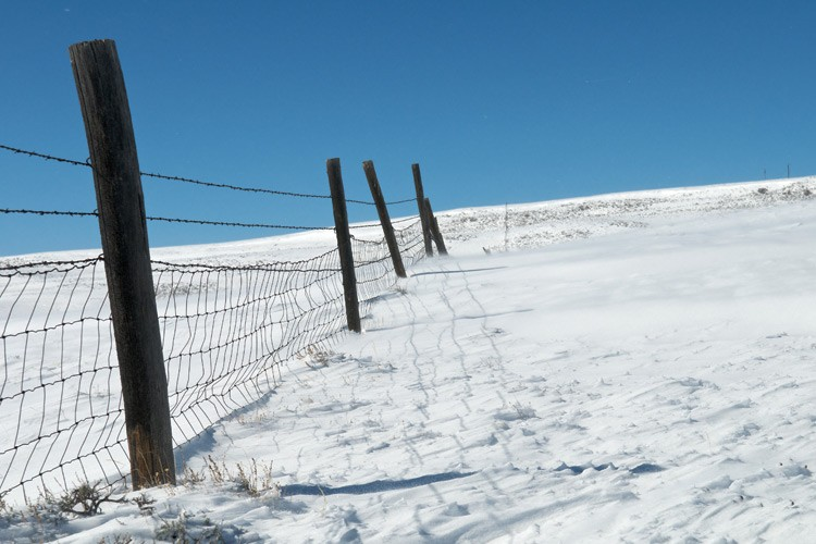 This old woven-wire sheep fence is an impenetrable obstacle to migrating pronghorn, who could freeze or starve if they get stuck behind it when a storm comes through.