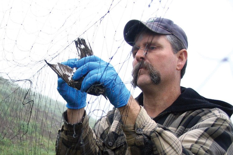 Corey Rossi, working on avian flu testing, did predator control for the federal government, and now runs the Division of Wildlife Conservation for Alaska.
