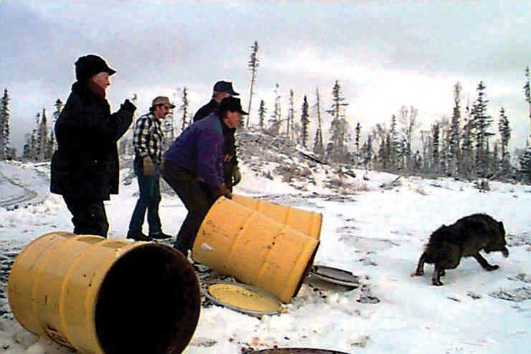 Ted Spraker (in blue) was part of a crew  in the late 1990s moving wolves in an attempt to keep them from killing caribou on the Alaska Range.