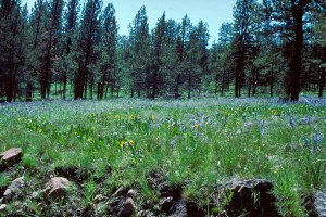 New national forest rule lacks rigor