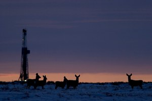 BLM stays course in Wyoming gas patch despite mule deer decline